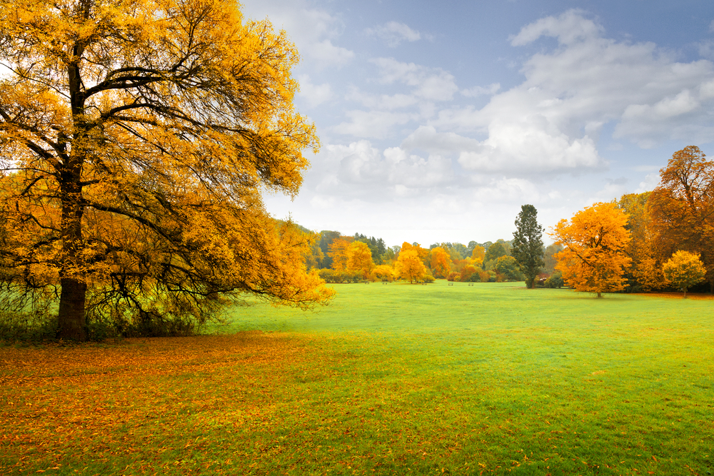 8 Steps to a Healthy Fall, Winter Lawn