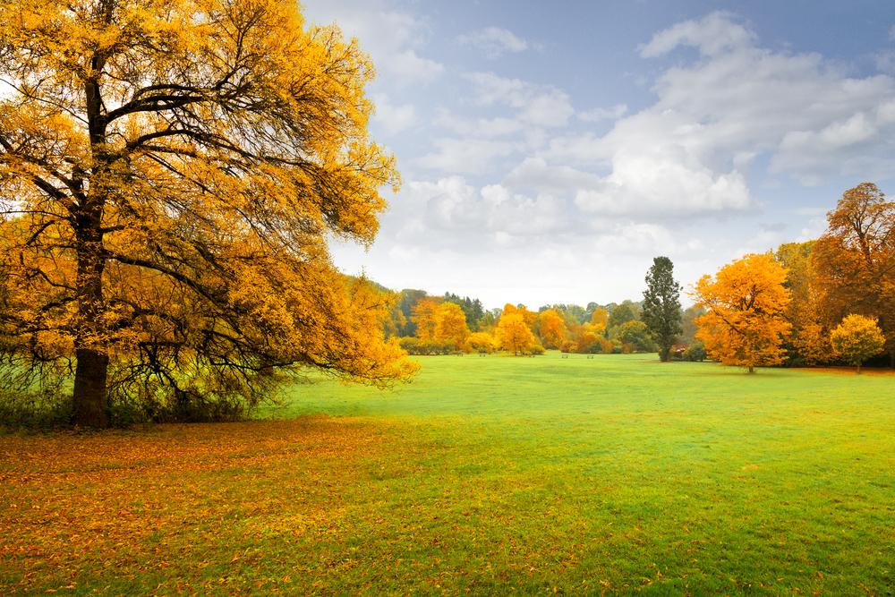 fall lawn shutterstock_117100894