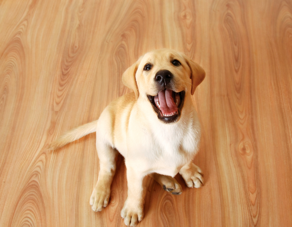 Animal Safety Tips: Bringing A Dog into Your Home