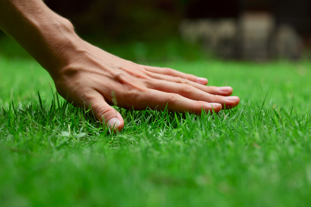 Save Water and Green: The Wonder of Drought-Resistant Grass