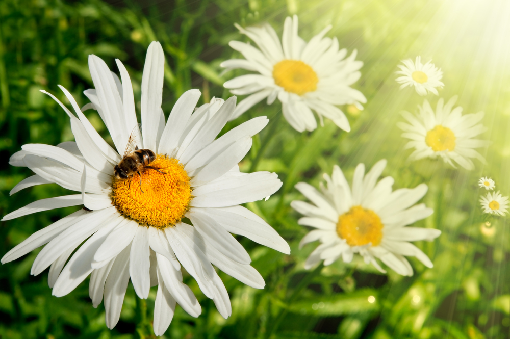 How Planting Gardens can Benefit the Landscape and Environment