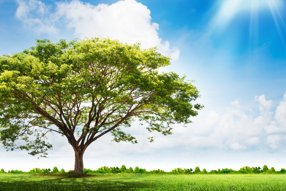 Protecting Nature's Greatest Asset: How Proper Tree Care Enhances Properties